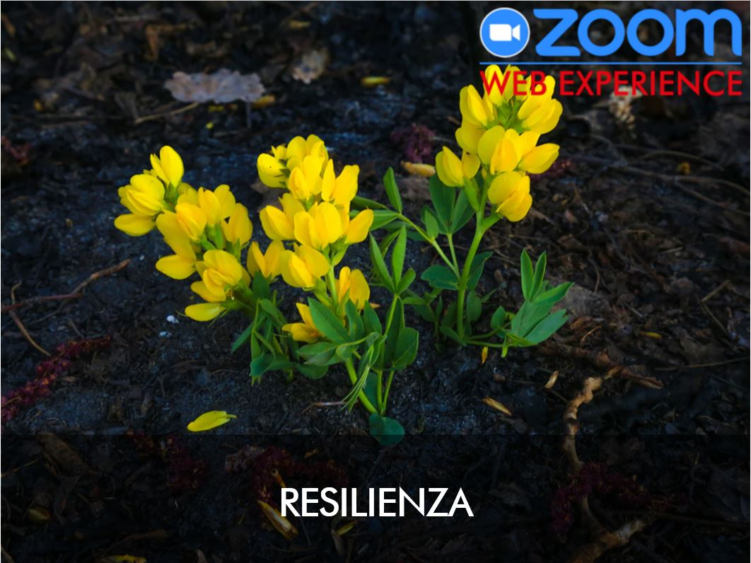 IG management - Resilienza