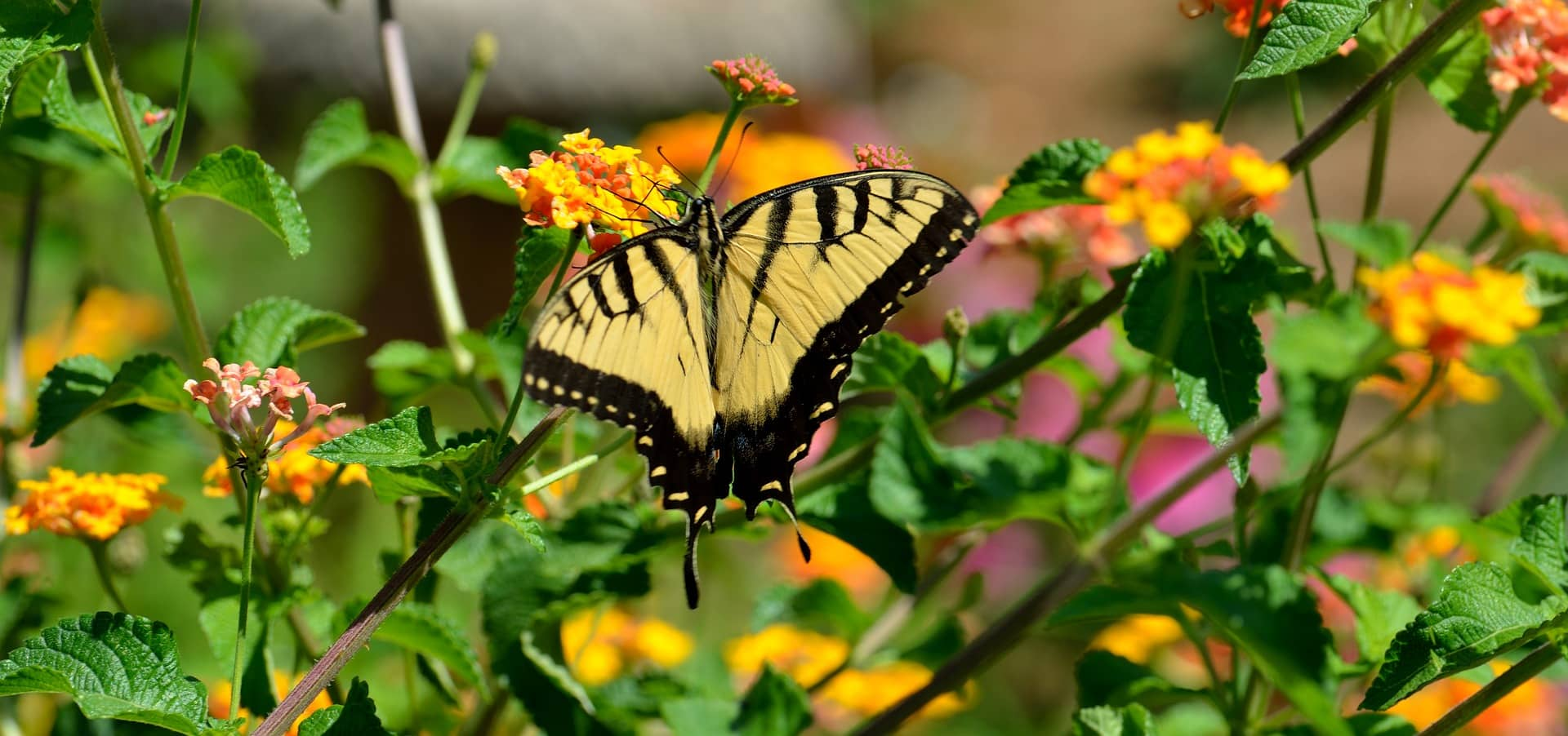 Bruco E Farfalla