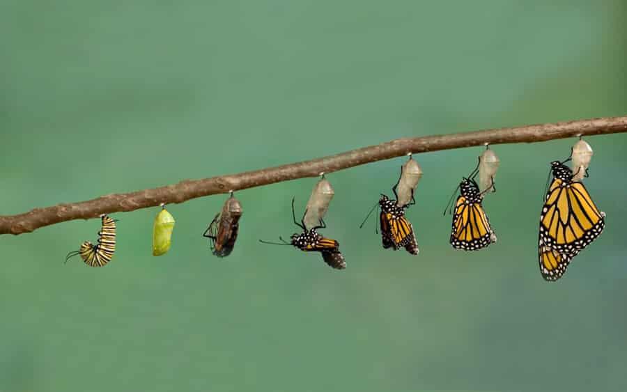 La Gestione Del Cambiamento: Quella Che Il Bruco Chiama Fine Del Mondo, Il Resto Del Mondo Chiama Farfalla